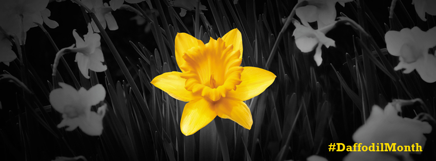 Single Daffodil facebook cover